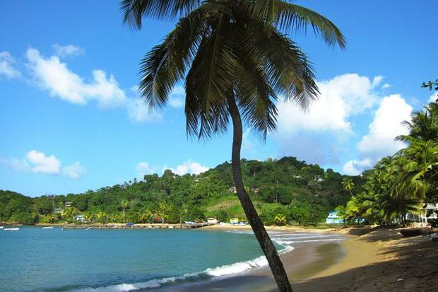 tropical beach with palm tree foreground