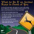 Drivers beware: It's deer season on the roads