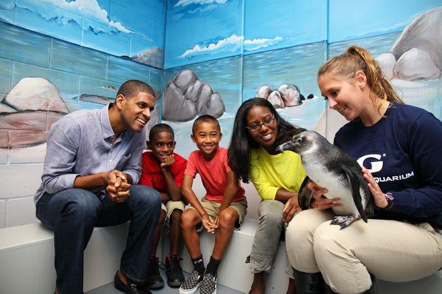 Georgia Aquarium Named One Of Top Animal Attractions by FamilyFun Magazine