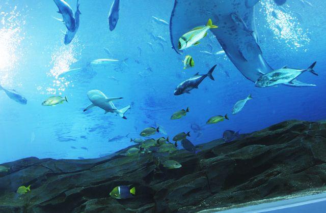 Ocean Voyager Tunnel