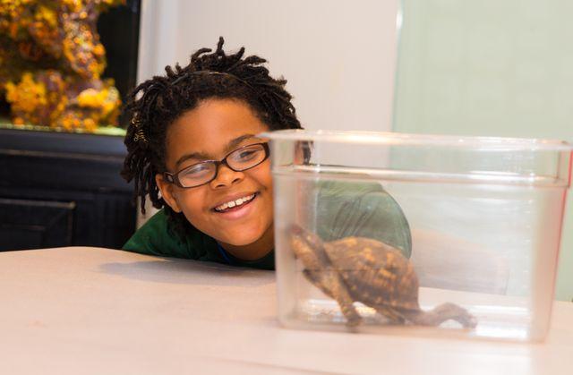 Child observing turtle