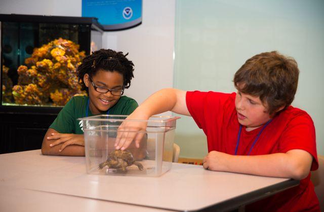 Children touching turtle