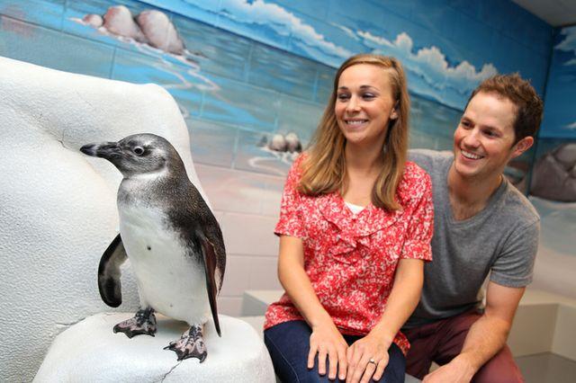 Georgia Aquarium Launches New Penguin Encounter