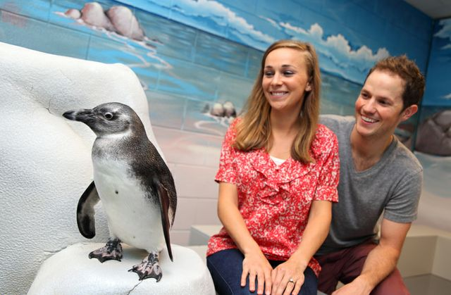 penguinencounter_0085