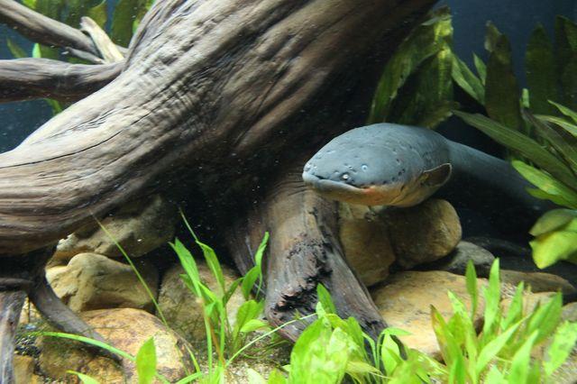 Stories | Georgia Aquarium