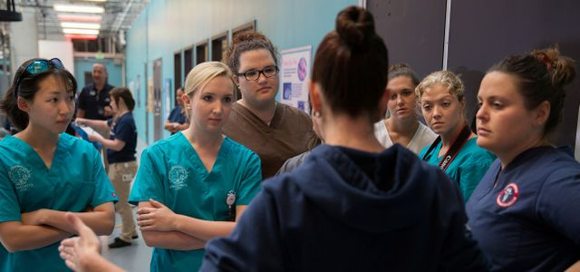 Veterinary Students Participate in AQUAVET® at Georgia Aquarium