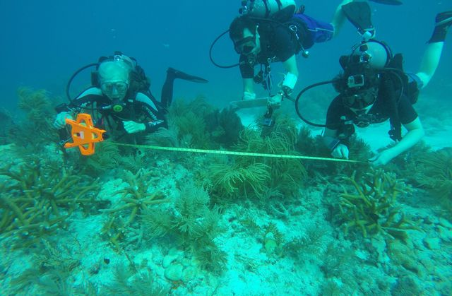 Divers Mapping (Photo Credit Mike Terell)