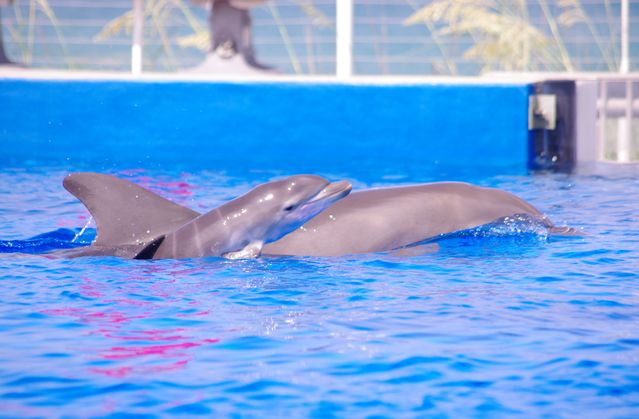 Marineland Dolphin Adventure Welcomes Dolphin Calf