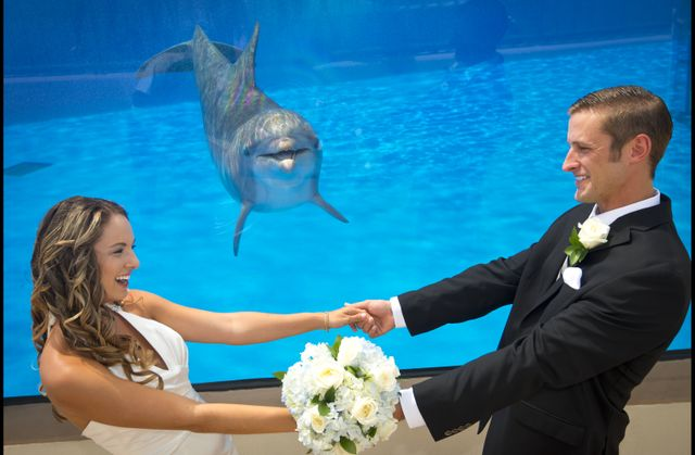 Wedding at Marineland Dolphin Adventure