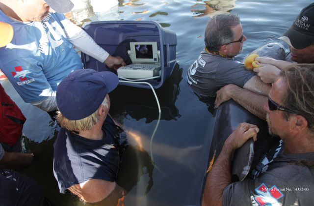 Dolphin Research Ultrasound