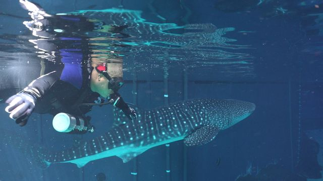 Atlanta VAMC Patients Find Swimming with Sharks Therapeutic