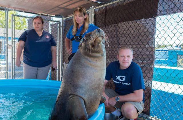 Sea Lion Transport16