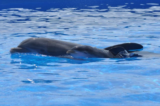 Marineland Dolphin Adventure Announces Name of Newest Dolphin Calf