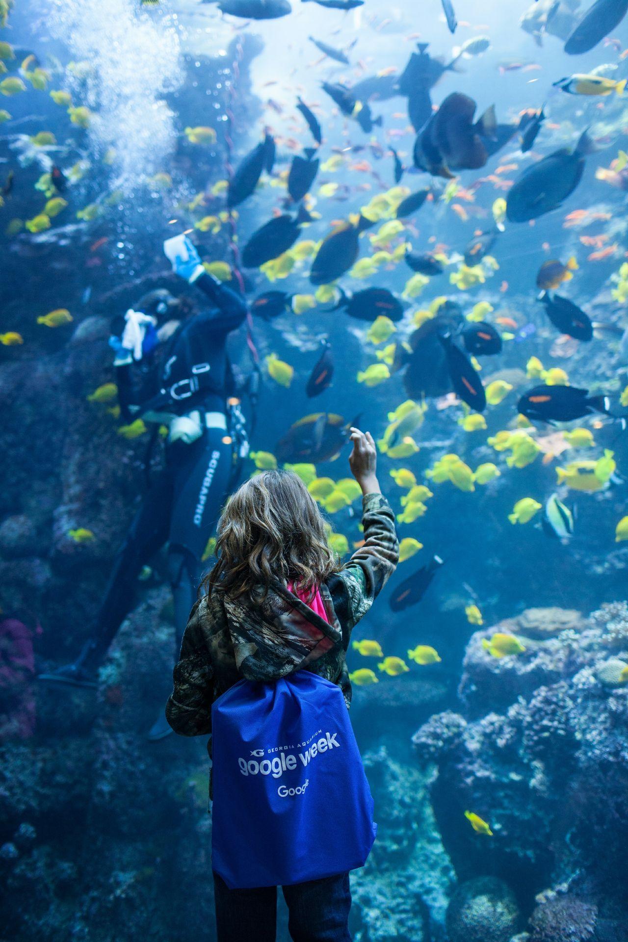 Google Week at Georgia Aquarium