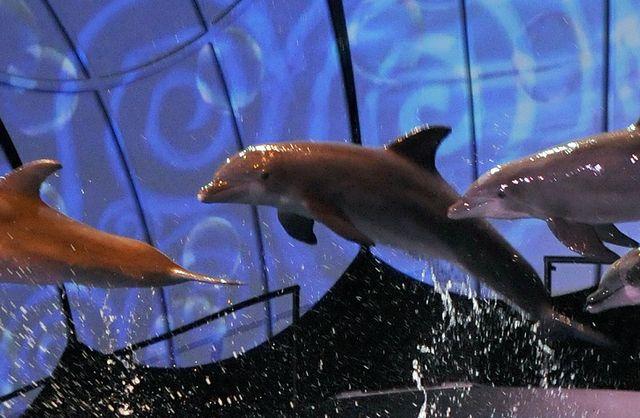 dolphin_header