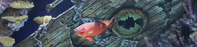 Georgia Aquarium Opens New Shipwreck-Themed Exhibit