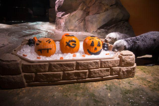 Georgia Aquarium Provides Festive Enrichment to Animals