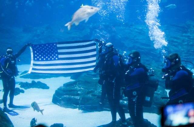 Activities to Honor Veterans Held at Georgia Aquarium
