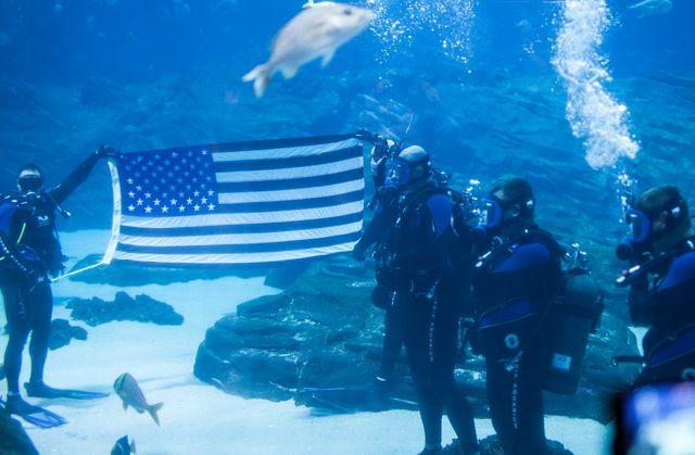 Activities to Honor Veterans Held at Georgia Aquarium