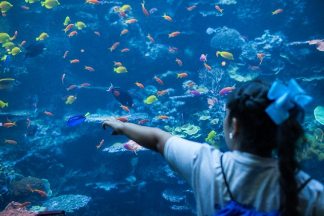 Georgia Aquarium and Google to Host 3,600 Students
