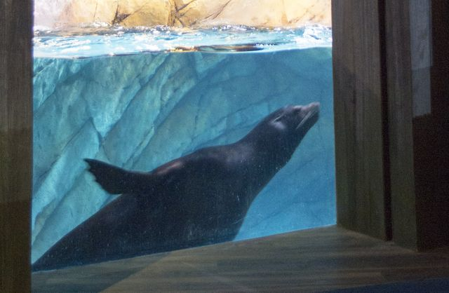 sea-lion-window_newsroom