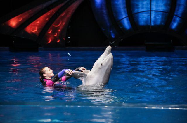 AT&T Dolphin Celebration