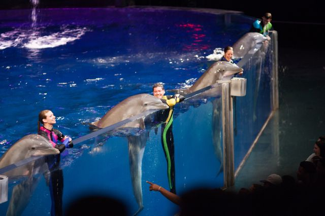 Georgia Aquarium Premieres New Sea Lion Gallery and Dolphin Presentation Today
