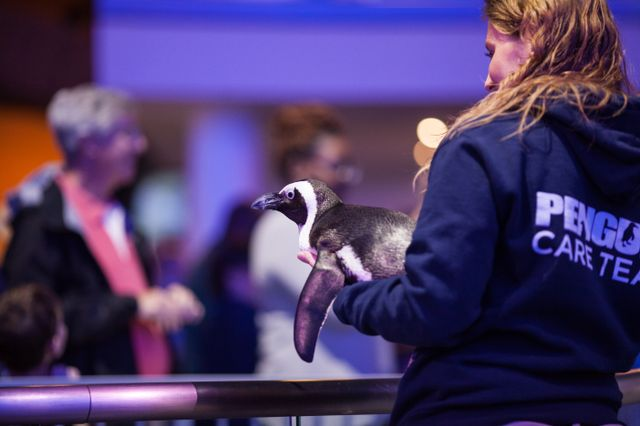Georgia Aquarium Debuts New Waddle Walk