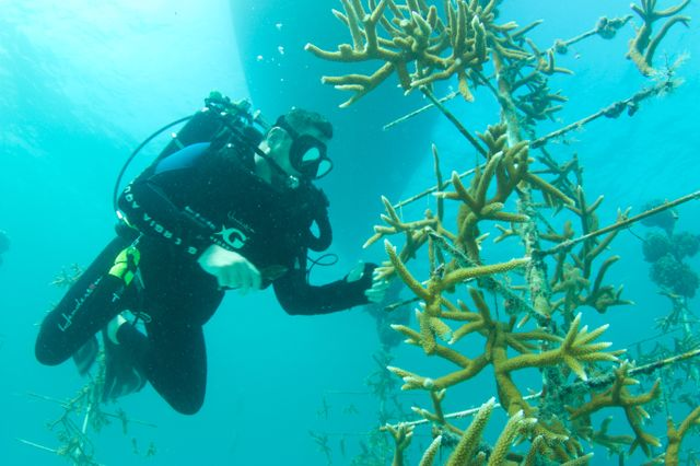 Georgia Aquarium Assists in Coral Reef Research and Restoration Efforts