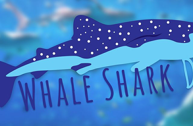 Whale Shark Day