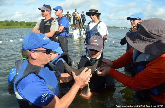 Dolphin Calf Disentangled From Marine Debris Near Daytona Beach