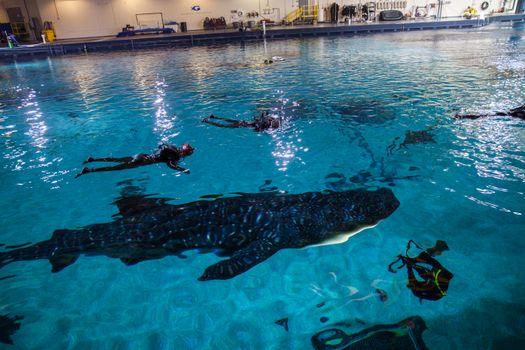 Georgia Aquarium to Recognize Veterans Through Fundraiser