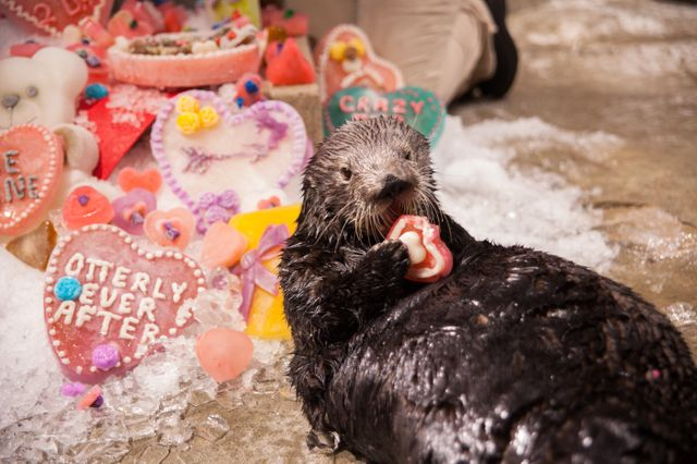 Whale you be my Valentine? Share the love at Georgia Aquarium this Valentine's Day!