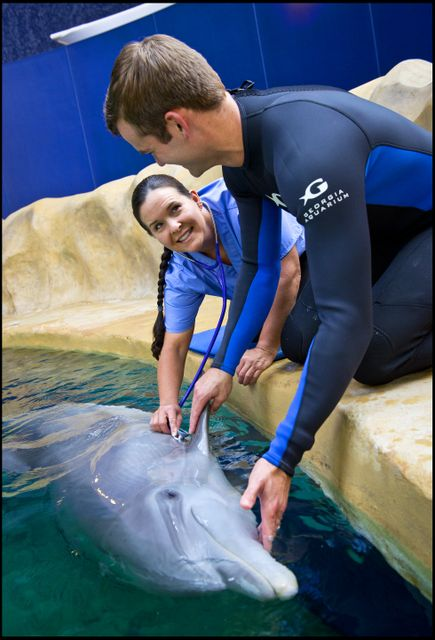 Dolphin Check Up