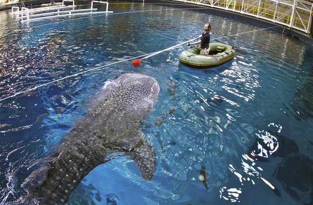 Georgia Aquarium Featured in Animal Planet 10-Hour Facebook Live Marathon