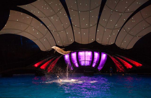 AT&T Dolphin Celebration_271