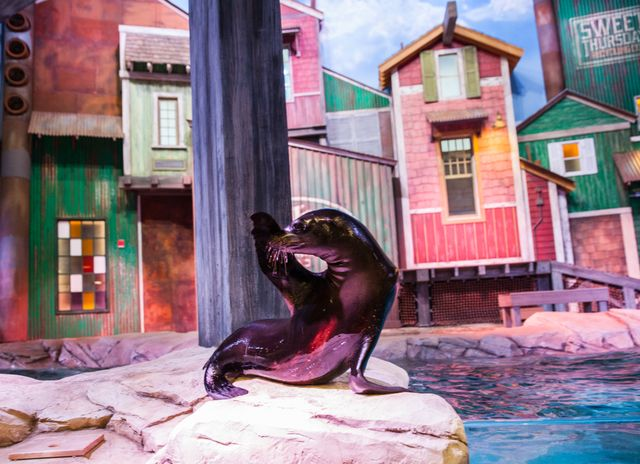 Sea-Lions-Exhibit-2