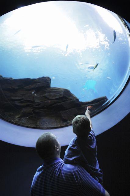 Georgia Aquarium Voted
