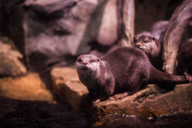 You Otter Check Out Our New Webcam!