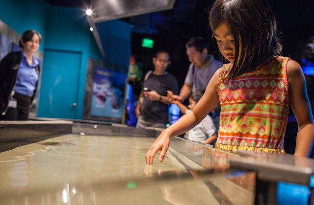 Get Up Close and Personal at Georgia Aquarium