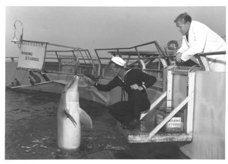 Curator Arthur McBride, expert on bottlenose dolphin behavioral studies.