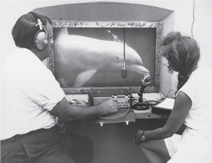 Scientists, David and Melba Caldwell, study dolphin vocalizations and identify signature whistles.