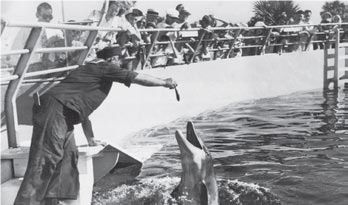 Feeding dolphins from the surface instead of underwater soon led to the world famous Jumping Dolphin Show.