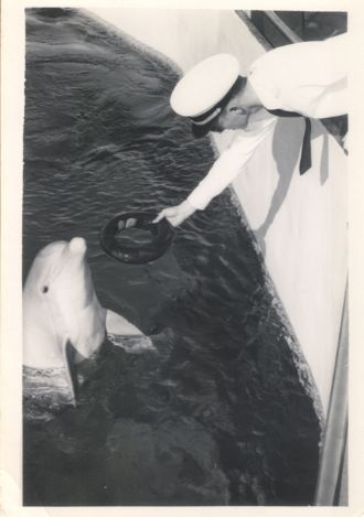 Very early dolphin interactive programming