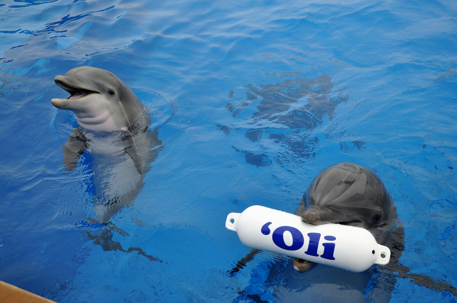five fin tastic reasons to visit marineland dolphin adventure
