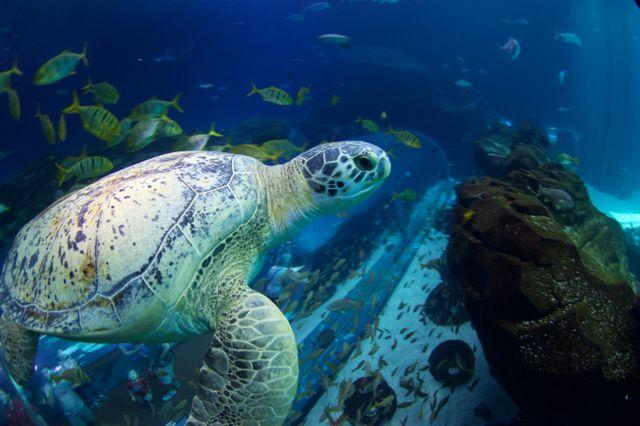 Seeing Green at Georgia Aquarium