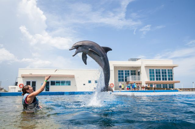 Five FIN-tastic Reasons to Visit Marineland Dolphin Adventure