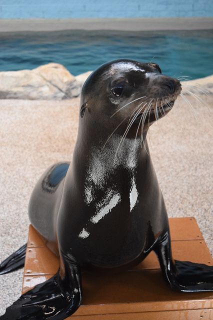 SEVENTH HEAVEN: Georgia Aquarium Reveals Rescued Sea Lion's Name