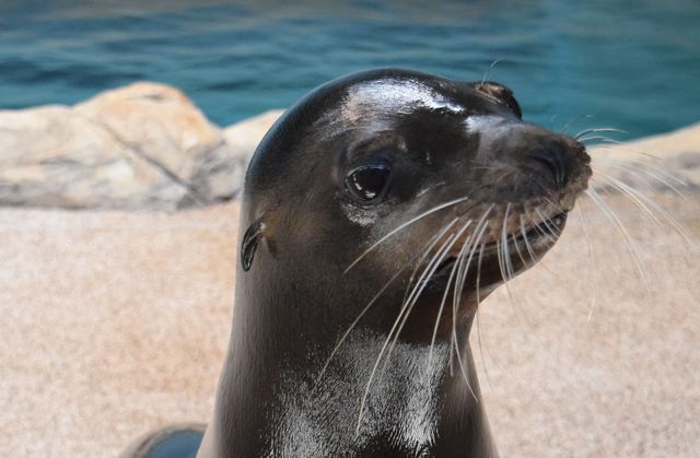 SEVENTH HEAVEN: Georgia Aquarium Reveals Rescued Sea Lion's Name
