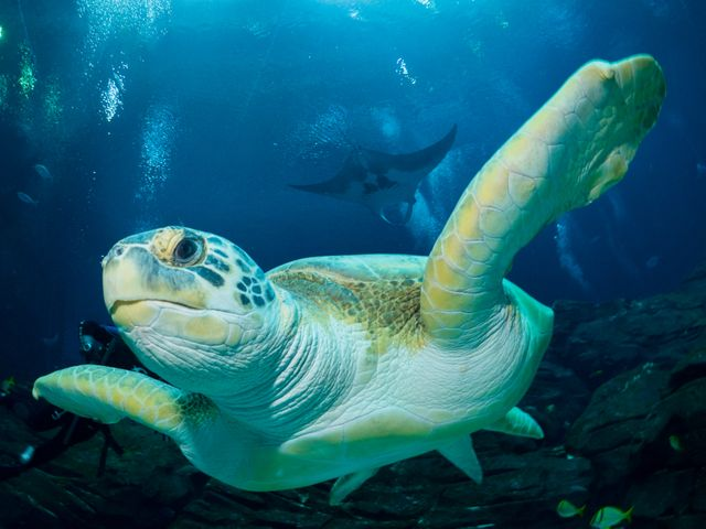 How You Can Celebrate World Sea Turtle Day